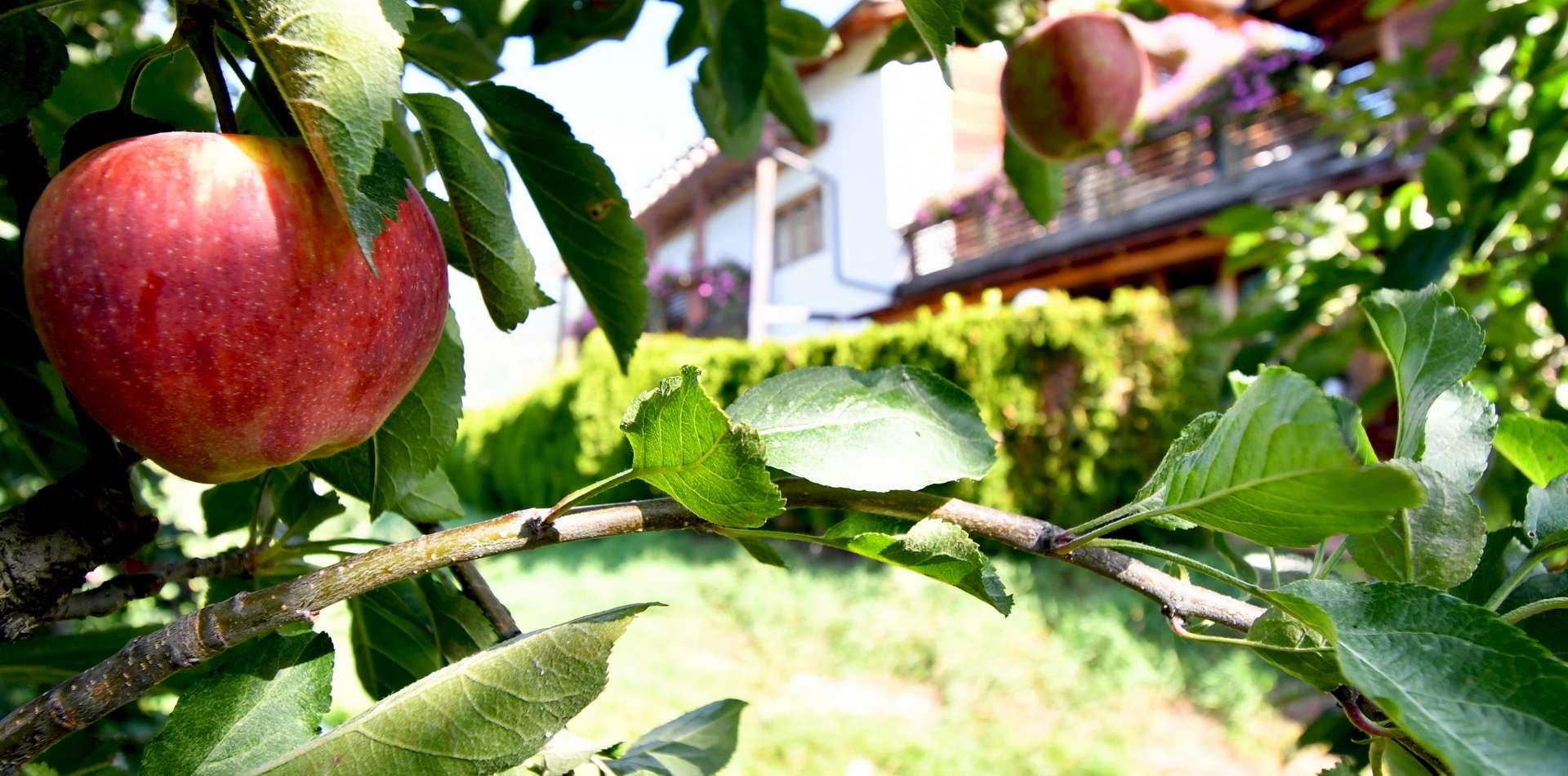 Hofeigene Produkte am Obermoarhof in Brixen - Südtirol